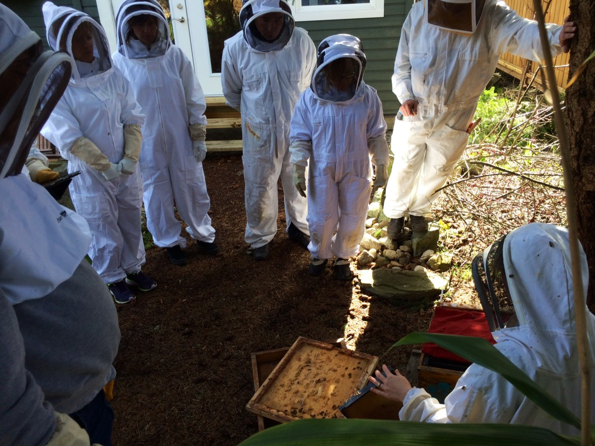 Looking inside a hive for the first time at the school.